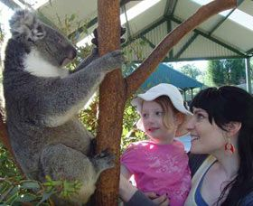 Meeting the koalas at Caversam