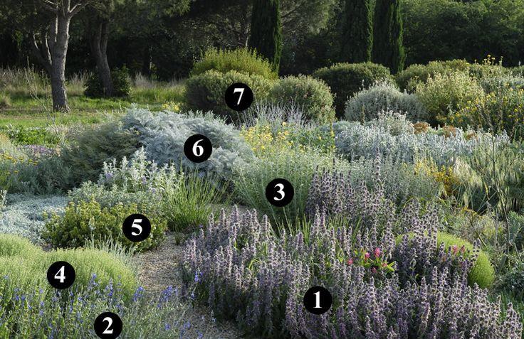 1 : Stachys cretica 2 : Salvia chamaedryoides 3 : Perovskia 'Blue Spire' 4 : Santolina neapolitana 'Edward Bowles' 5 : Salvia lavandulifolia subsp. blancoana 6 : Centaurea cineraria 7 : Cistus creticus