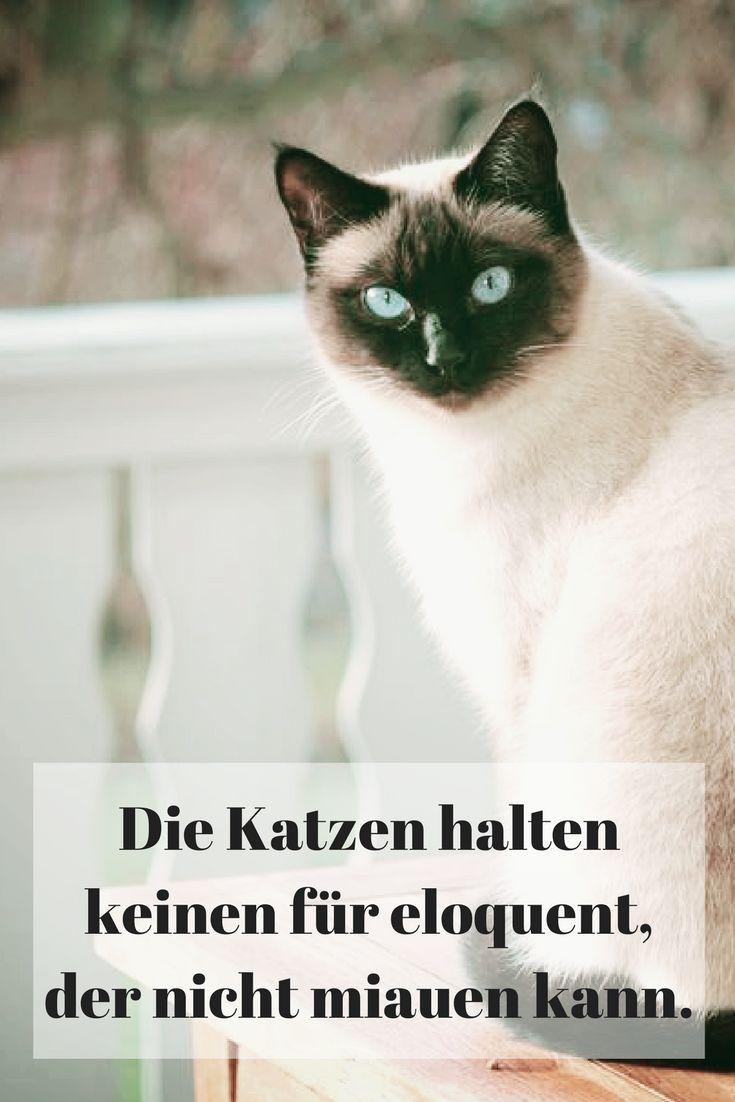 Die Katzen halten keinen für eloquent, der nicht miauen kann.
