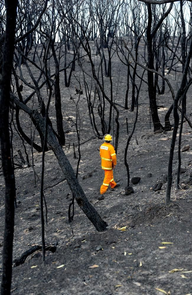 Desolation ... A CFS Volunteer looks over burnt ground on Kersborrk Rd in the Adelaide Hills. Picture Campbell Brodie.