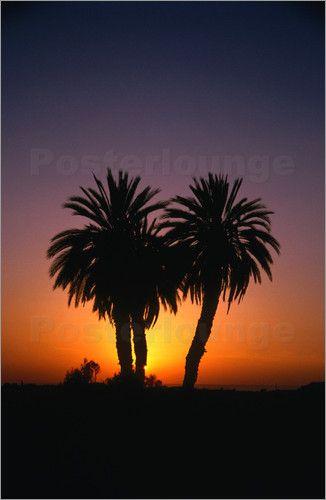 Dattelpalmen bei Sonnenuntergang - David Else - sunset