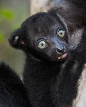 Gill Merritt, Madagascar