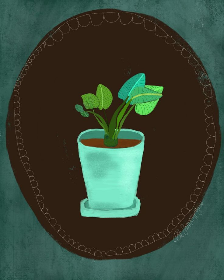 "Plant succulent drawing illustration  Ali Lamontagne Illustration (@alilamontagneillustration) on Instagram: ""🌱🌿🍃"""