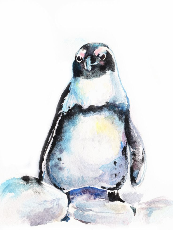 African Penguin Watercolor Bird Painting By Christy Obalek