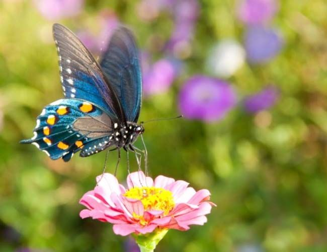 stunning-pictures-of-colorful-butterfly