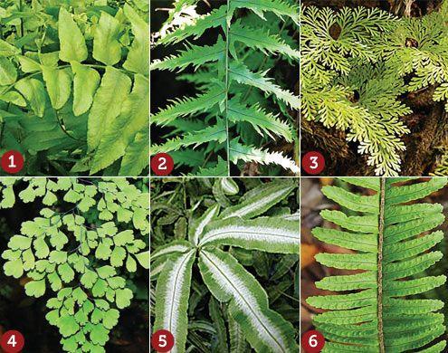 Aprenda como ter samambaias verdinhas no seu jardim