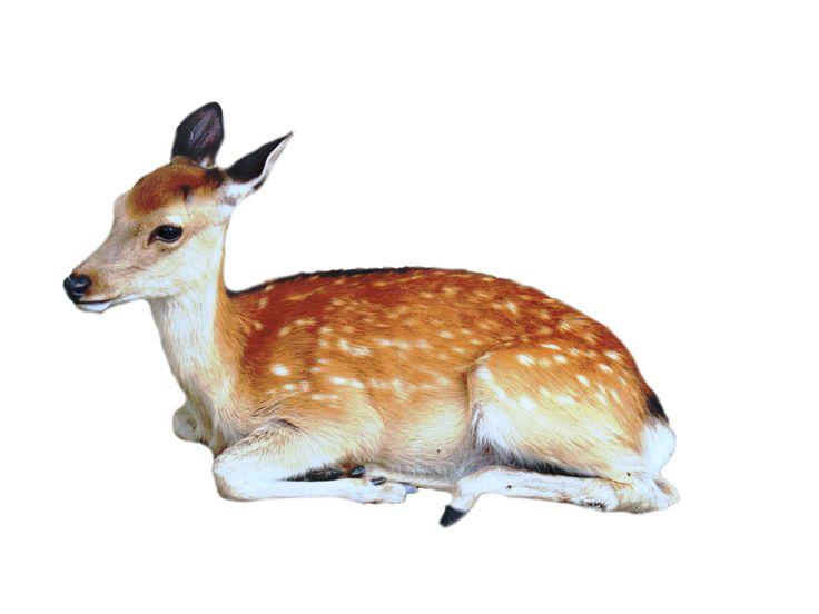 Precut Deer PNG by ~kayleero on deviantART