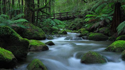 Taggerty Cascades Walk, Yarra Valley and Dandenong Ranges, Victoria, Australia