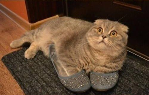 I Just Wanted To See What It Felt Like In Your Shoes Cats Animals Cat Pics