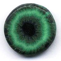Augencane