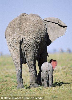 גם אם נגדל ״ עור של פיל״, עדיין לכל אחד מאיתנו חשוב שיקשיבו לו. באמת. וישמעו אותו