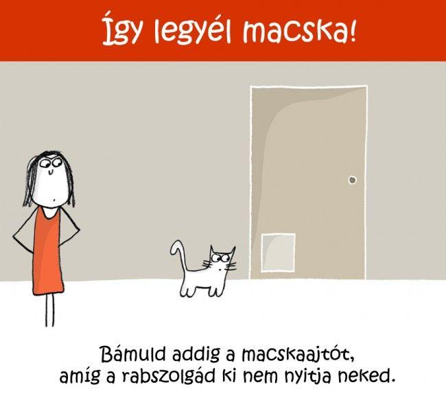 2119 Így legyél macska!   Tippek és ötletek kezdő cicusoknak