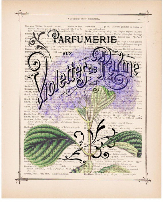 Purple hydrangea French perfume ad Violettes printed as dictionary page art print on old antique dictionary book page