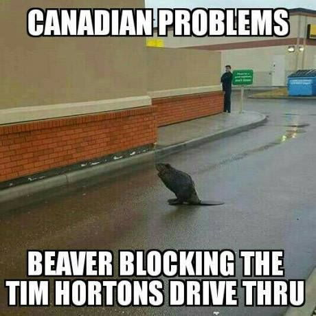 Found on Facebook Dang, I'd kill for Tim Hortons. We'll bribe the beaver, Eh?