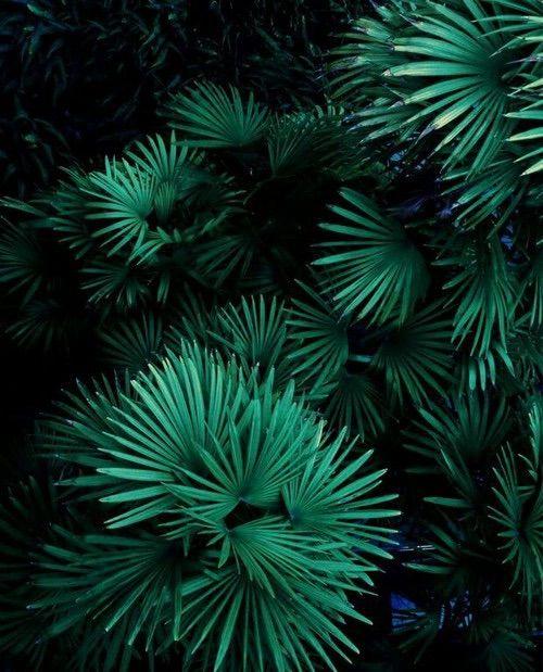 Pingl par zani sur green pinterest for Lacroix jardins 78