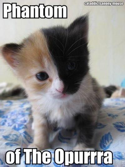 :-)Music Jokes, Pets, Funny, Dark Side, Phantom, Kittens, Kitty, Cat Lovers, Animal