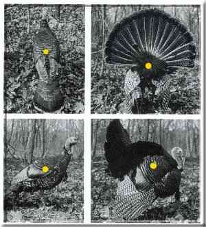Bow Hunting Turkeys : vitals