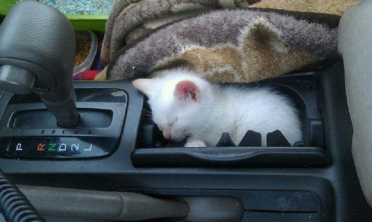 Hiding Places, Kitty Cat, Sleepy Kitty, Funny Cat, Cat Sleep, Cat Naps, Cups Holders, Cat Stuff, Animal Funny