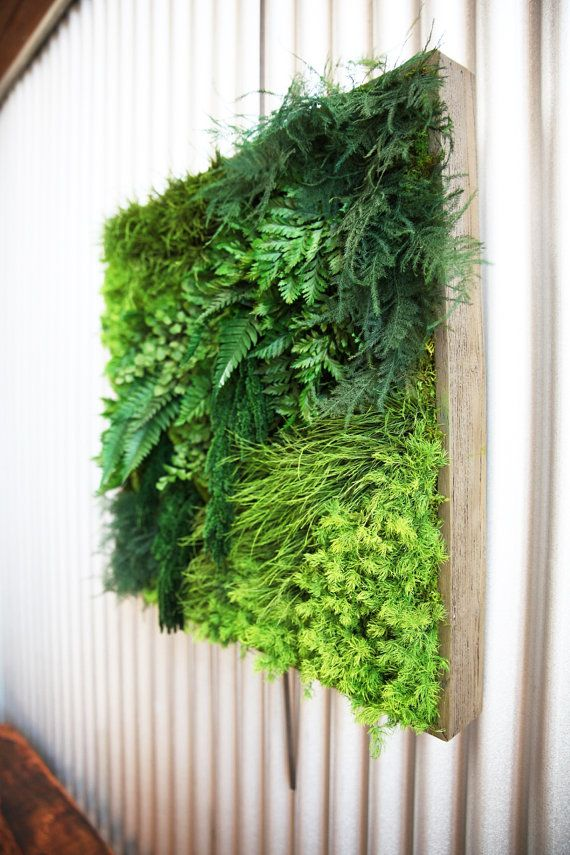 No Care Real Preserved Moss And Ferns The By ArtisanMoss On Etsy Wall ArtMoss