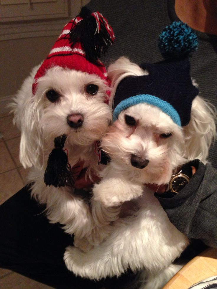 Rosie and Rocco