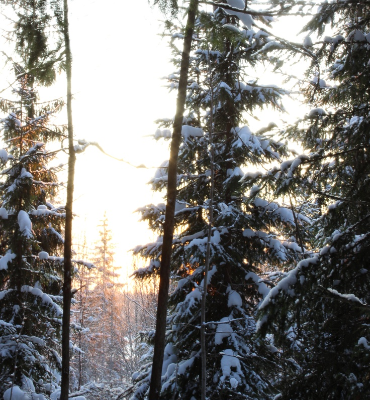 Sunset in a Finnish winter forest