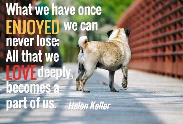 loss of dog