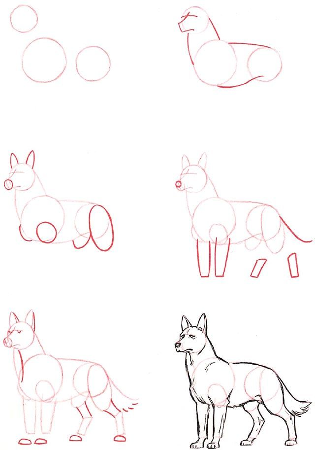 how to draw an anime wolf pup step by step