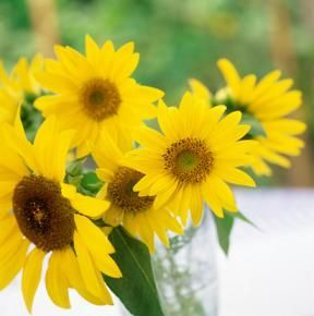 An Awesome List Of Yellow Flower Names How Many Do You Know