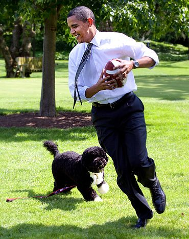 President Barack Obama playing with his dog..  Abbeyvets: what is the breed?  Meant to be Portugese Water Dog.  Looks like Portugese Lager Dog!  P