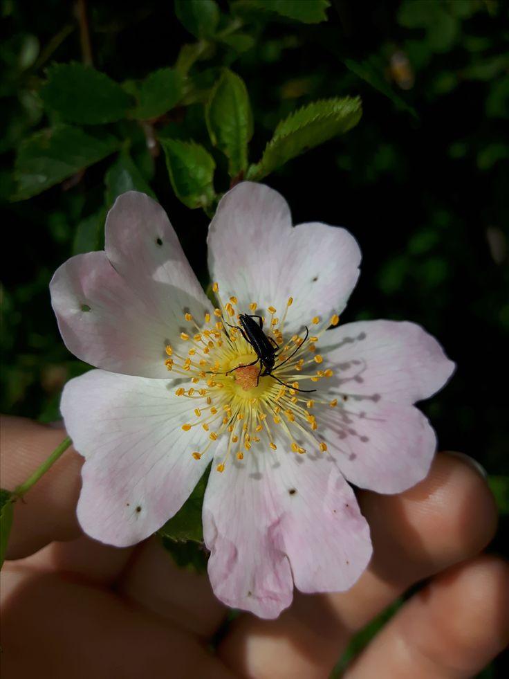 střevlík(Carabidae) pálava