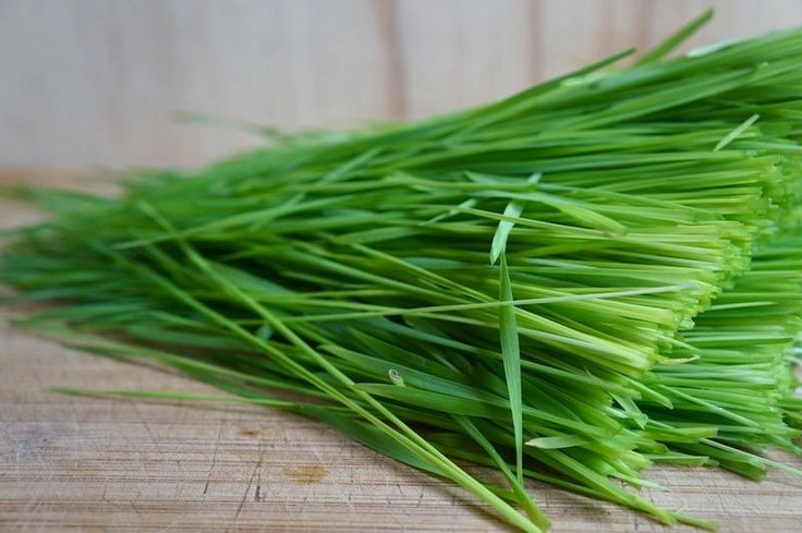 wheatgrass ready to be juiced