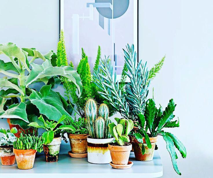 #HumpDayHomeImprovement Spice up empty spaces in your home with vibrant house plants!   #harvestrealtors #realestate #homeimprovement #humpday #tipsandtricks #houseplants #homedecor #southbay #losangeles #socal