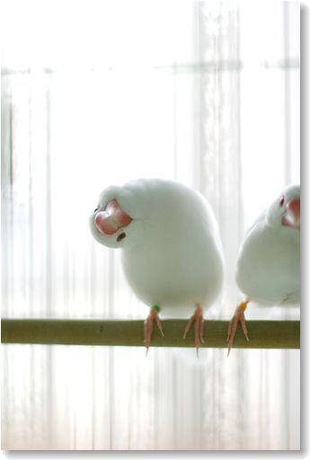 メリーさんの文鳥の画像|エキサイトブログ (blog)