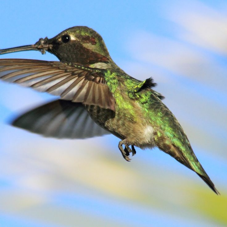 Do you think Freddy the dominant male Hummer. deserves to win 2013 - 2014 Arizona Highways Online Photography Contest? Have your say!
