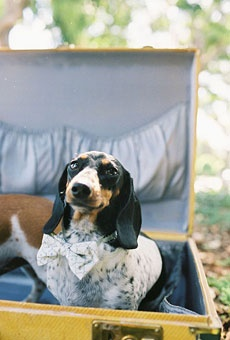 "@Lauren Elizabeth This reminded me of ""Russer!""   Puppy love! {Pets in Weddings} 