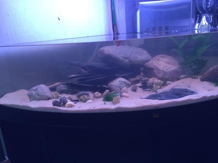 Trigon 350 axolotl