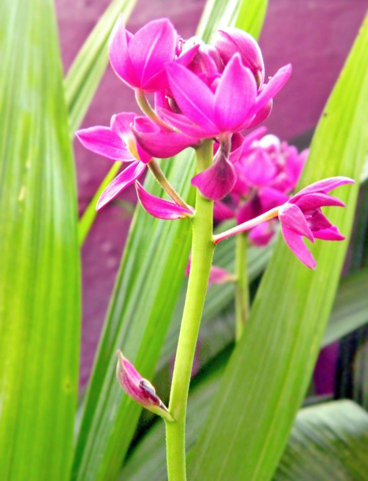 La intuición no es mas que reconocimiento.  #flower #orquidea #picgreat #photography #focus #contrast #picoftheday #green #garden #colorfull