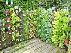 Les avantages d'un potager vertical sont bien évidents. Mais comment le réaliser soi-même et quelles plantes y cultiver ? Les réponses de ces questions et