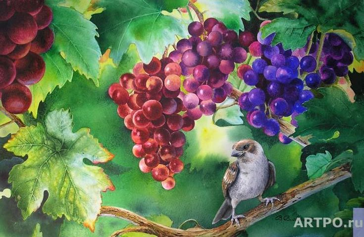 In the clump of grape | Valevskaya Valentina | ARTPO: art for sale ...