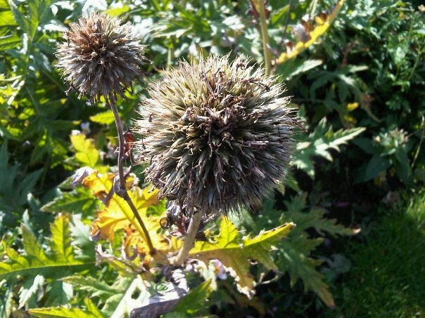 Taken in the Botanic Gardens in Glasgow's West End.