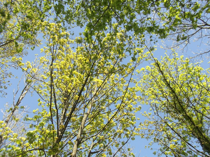 Spring green & blue on sunny day