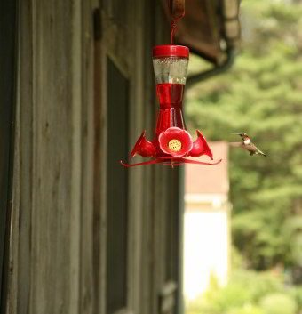 Homemade Hummingbird Nectar without the red dye