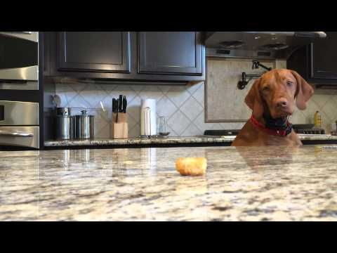 This Dog Failing To Eat A Tater Tot Is All Of Us