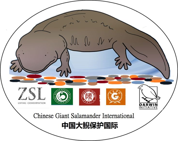 Chinese Giant Salamander Conservation | People and Partnerships
