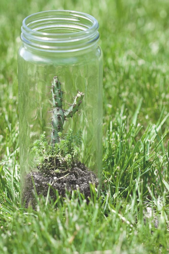 #terrariums #glass #jars #cactus #carycompany