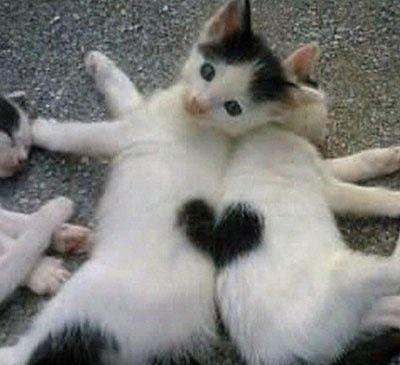 고양이 하트