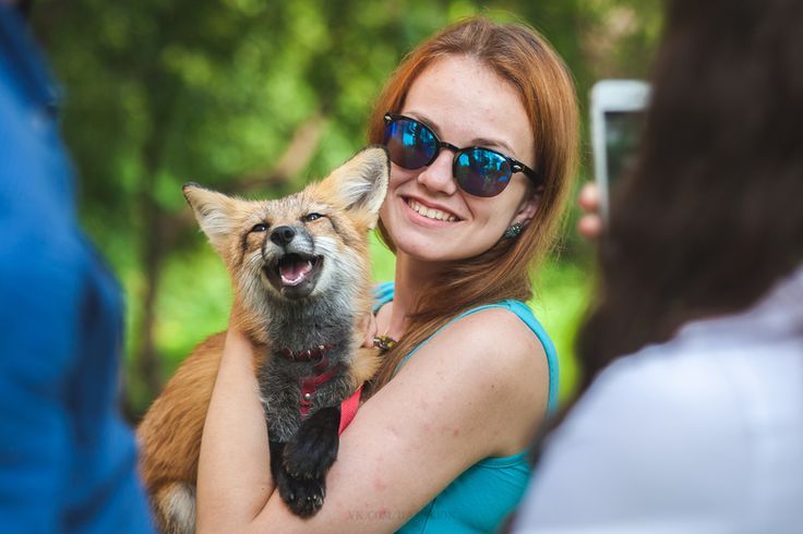 Лиса,лис, лисы, лиска,фэндомы,домашняя лиса,Домашние лисы,домашняя лиса Герда,живность