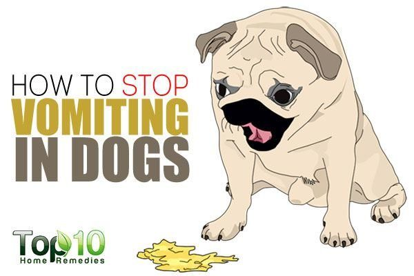 How To Stop Vomiting In Dogs Sick Dog Dog Remedies Your Dog