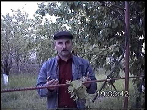 ФИЛЬМ ПРО ВИНОГРАД С УРОКАМИ №1,2,3,4,5 VP8 - YouTube
