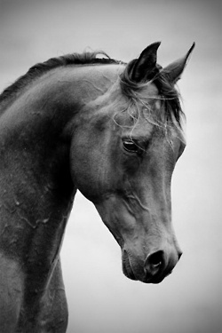 Horses are among the most intelligent of creatures :) Not to mention lovely